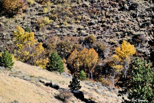 17Oct2013_1_Fall-Sojourn-Bogus_Canyon-Aspens