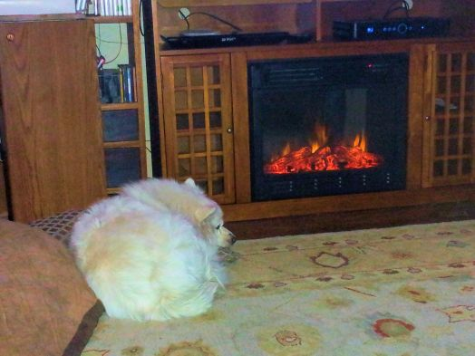 You would think that it is cold outside. Buddy, our American Eskie, just curled up with his pillows by the fire and settled in. Love it!
