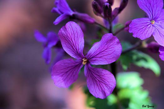 Maggie's Flower