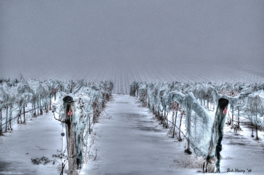 """Moody Vineyard"" Parma Ridge Vineyards, Parma, Idaho"