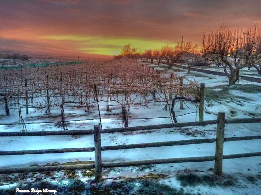"""Winter Vines in HDR"" Parma Ridge Vineyards, Parma, Idaho"